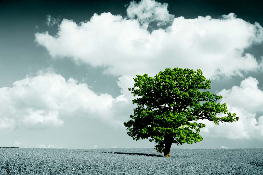 a big green tree standing alone in a white field with a grey cloudy sky as the background