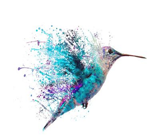 a teal and purple humming bird hovering