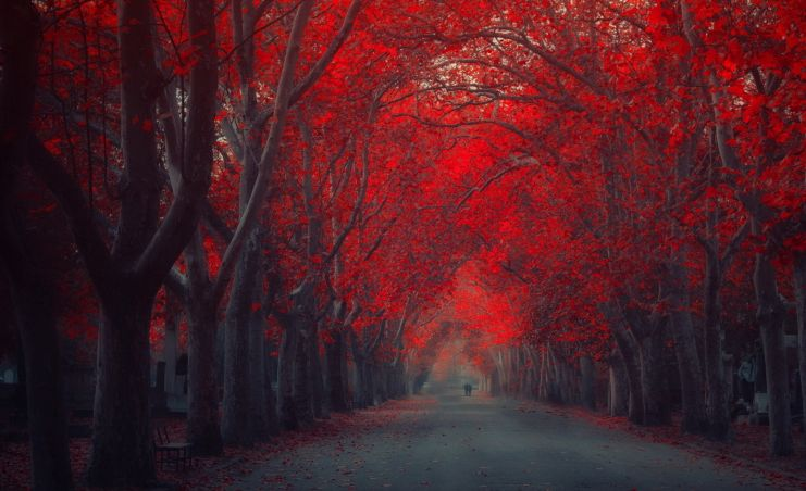a long lane lined with red autumn trees